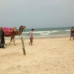 Camel on beach