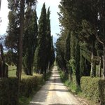 Cypress trees lined entrance