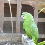 One of the parrots in the property