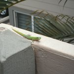  Friendly visitor on ledge outside our room