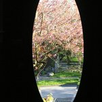 Cherry trees in bloom through the front door