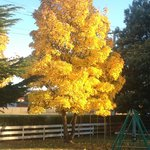  Autumn Colours at Albert Town Lodge