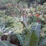  jungle view from the veranda