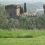  View from the olive orchard