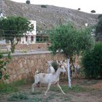  goats on the rampage eating trees..funny