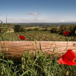 Provence, poppies and wine....