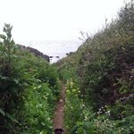 trail to beach with wildflowers!