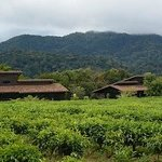 View of a few of the cabins in the tea plantation