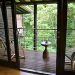 View of rainforest from cabin