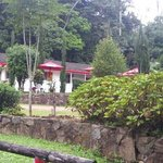 Tall Trees Motel is on a beautiful property nestled amongst the rainforest and waterfalls.