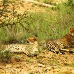 Thornybush game drive