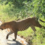 Yala Safaris - Private Tours