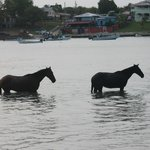  horses in the ocean