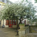  Beautiful tree in blossom at entrance