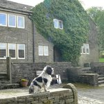 Friendly family dog in front of the farmhouse.