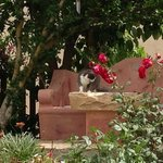 la nostra Illy nel bellissimo giardino