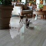  cats in the lobby