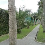  Palm trees lining walkway