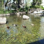 Roof-top garden with duck pond
