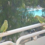  the parrots that called each morning and evening