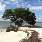  Cool Tree @ Anne&#39;s Beach