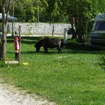 Photo of Camping la Ferme de Castellane