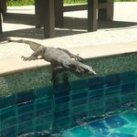 Wildlife by the pool