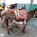  do you really NEED a donkey (are you less than 130 pounds?)