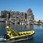 Whale viewing boat in the Inner Harbour