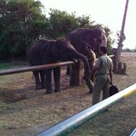 Elephant feeding at Mudumalai near Gudalur
