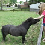 fun time petting the shetlin pony