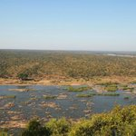 Hippo in Olifants River