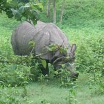 Happy munching  rhino