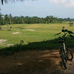 Rice fields cycling