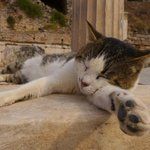  CATS OF EPHESUS
