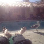 Friendly poolside seagull