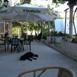 the shared patio area, with the worlds laziest dog!