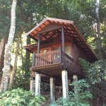 Rainforest Chalet