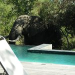 A Visitor at the Private Pool