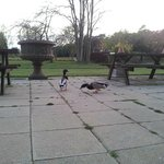 the ducks from the nearby lake visit for their morning bread. great for the kids to see!