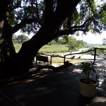 Lunch under a huge shady tree