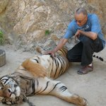 I was scratching the tigers back, and it rolled over for a belly rub. My heart was pounding!