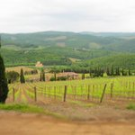 Typical Chianti scenery,  gorgeous