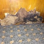Damage and mold in kitchen.