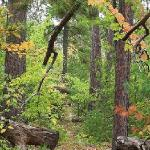 Join Timber Wolf Lodge for our weekly Angela's Adventures, which include guided nature hikes int
