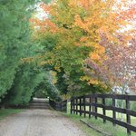  Fall driveway