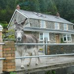 Guest house and one of the donkeys