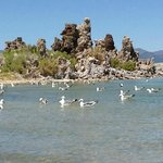 Birds and a Tufa Tower