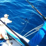 The First Marlin I caught