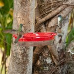 the amazing hummingbird feeder by the pool
